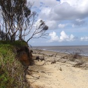 Natural erosion of the cliffs is unavoidable on the East coast (Benacre Wood, Suffolk).