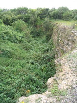 Years of neglect left this SSSI seriously overgrown and completely inaccessible (Foss Cross Quarry, Gloucestershire).