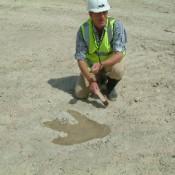 Close-up of the Megalosaurus footprint at Ardley Quarry.